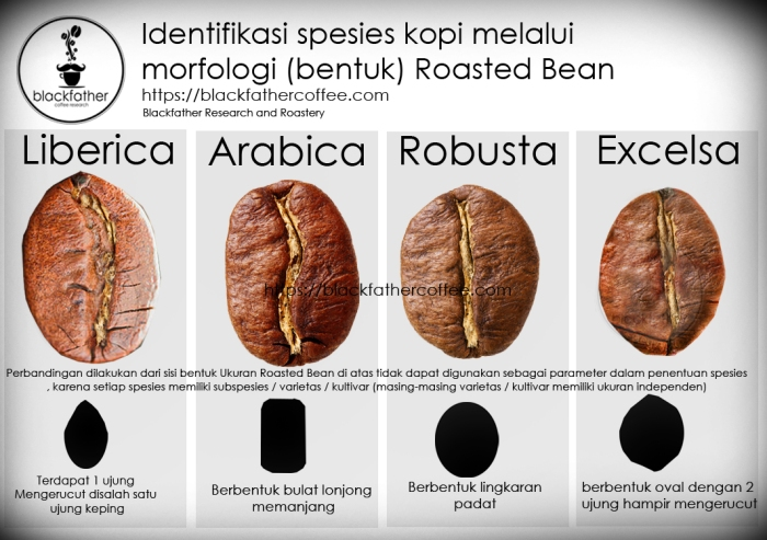 PERBANDINGAN SPESIES KOPI Indonesia copy
